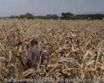 Film: Seeds of Freedom Tanzania