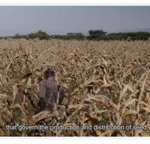 Film: Seeds of Freedom Tanzania